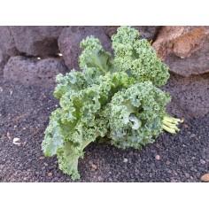 Kale verde (1 Manojo)