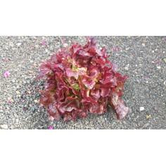 Lechuga roja (1 Unidad)