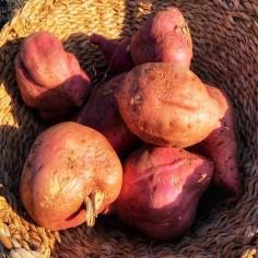Batata roja (1 Kg)