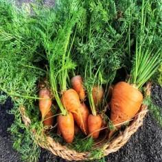 Zanahoria (250 g)